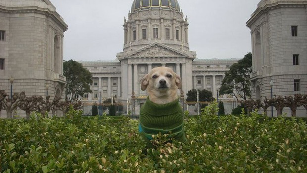 Frida the Dog, Mayor for the Day