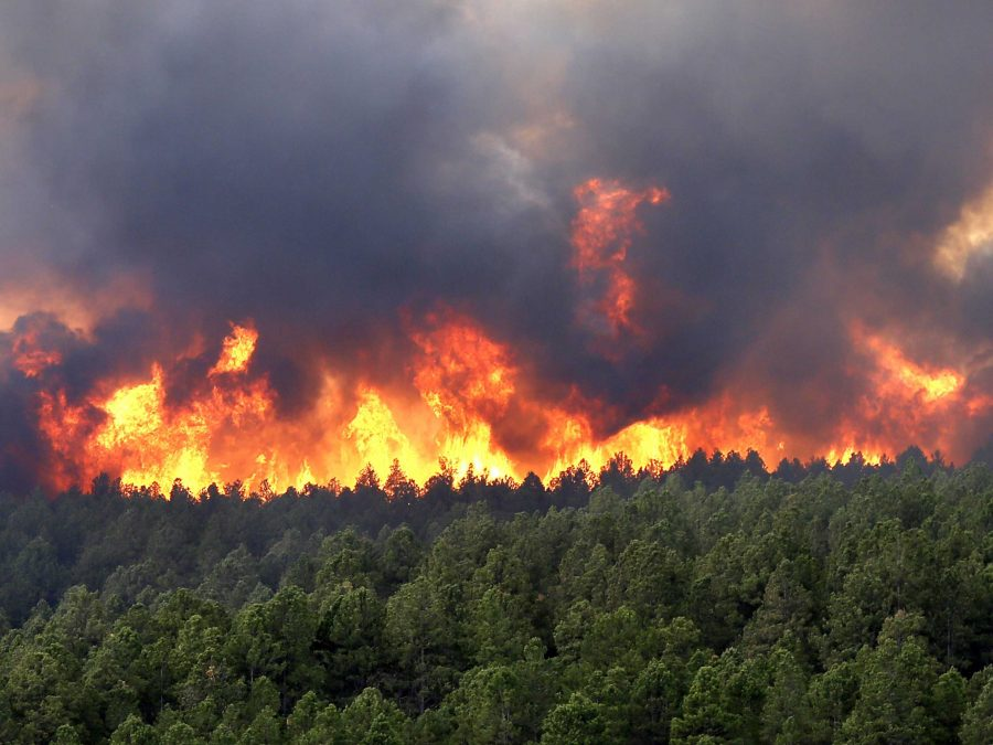 A wildfire scorching a forest.