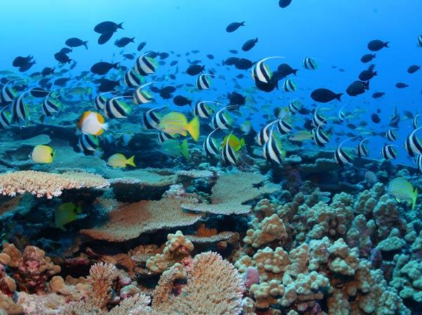 Papahānaumokuākea is home to more than 7,000 marine species. Photo courtesy of http://www.papahanaumokuakea.gov/