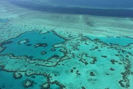 Above is not even a quarter of the reef in which has already become extinct. Immediate action is necessary in order to protect this natural masterpiece.