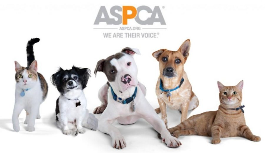 Pets+have+been+scientifically+proven+to+benefit+owners%E2%80%99+healths.+Photo+courtesy+of+ASPCA%0A
