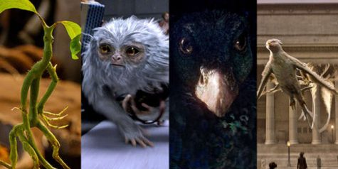 These are some of the magical creatures introduced throughout the movie.