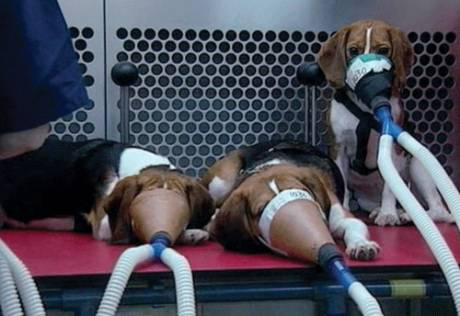 Because of the USDA, now animals can be abused without the public knowing. Photo courtesy of OccupyForAnimals