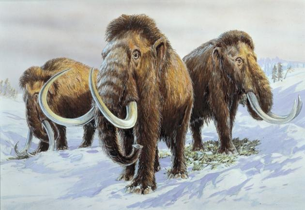 Mammoth+carcasses+were+preserved+in+permafrost+which+provided+DNA+to+the+scientists.