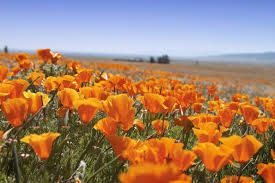 The Super Bloom Apocalypse