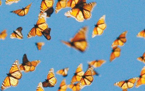 Butterflies Migrating through Southern California