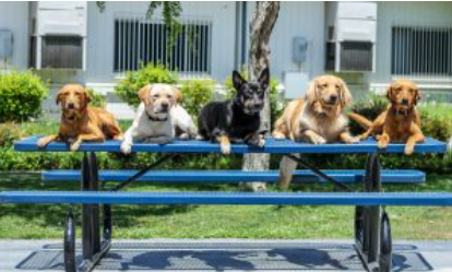These are the canines that will be attending the campus of Yorba Linda High School sporadically.