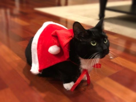 There are many things one can do to give back to the community this holiday season, and an example of this can be helping out animals at an animal shelter.