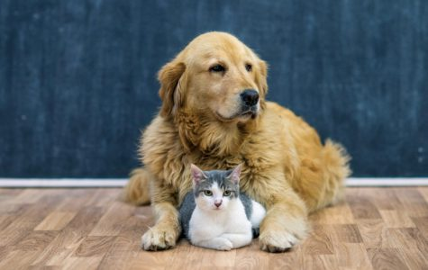 Dogs and cats are the two most popular pet choices in the United States.