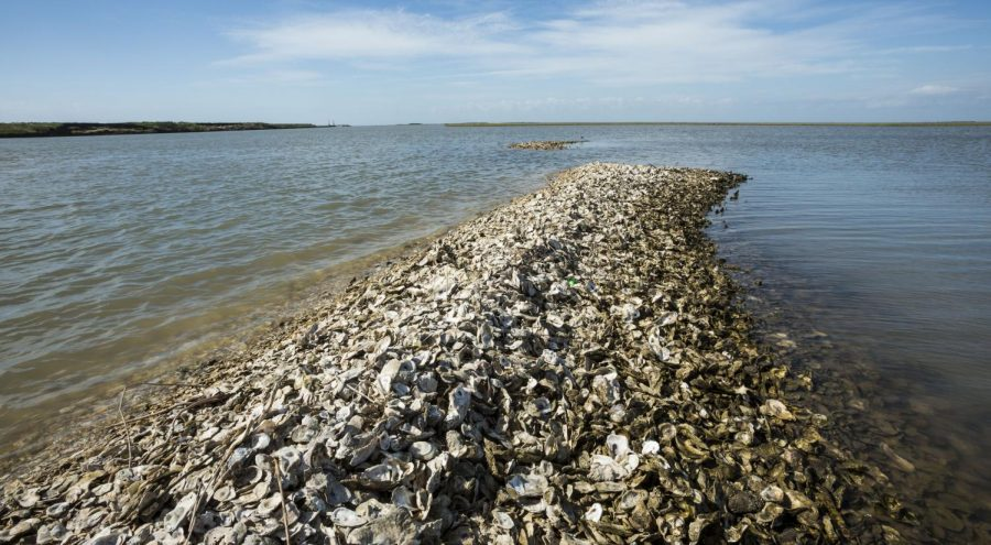 Oyster+reefs+are+one+of+the+newest+methods+of+preventing+coastal+erosion.+Communities+even+in+Orange+County+are+working+to+establish+oyster+beds+to+buffer+abrasive+currents.