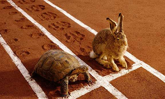 The fable about a hare and tortoise depicts the race between talent and work.