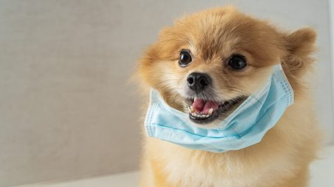 "People's concern for pets have resulted in the purchasing or creating of masks or suits for their pets. As the virus has so far been mostly transmitted person to person, President of the American Veterinary Medical Association, Dr. John Howe, says that ""this is a total waste of money, a total waste of time."""