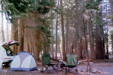 My campsite is placed under a massive tree canopy at the Buck Rock Campground in the Sequoia National Forest. Source: Paige Reddick
