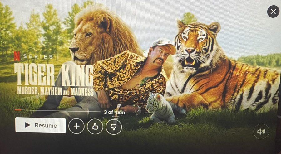 Tiger+King+is+a+hit+Netflix+Documentary+that+went+viral.%0Aover+quarantine.+%0A