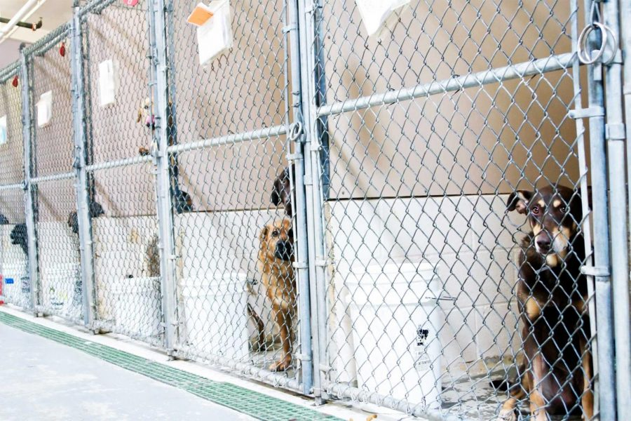 Pictured here are dogs eagerly waiting for their forever home, separated by cinder blocks and metal fencing.