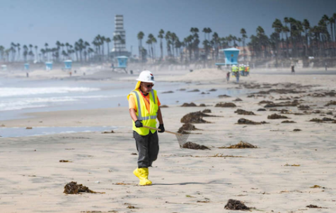 After the oil spill that occurred off the shore of Huntington Beach, many people have helped clean up after the environmental disaster.